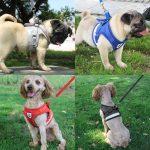 Erschwingliches Hundegeschirr online kaufen
